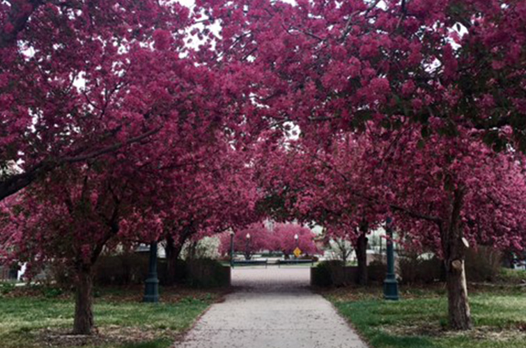 Spotify Playlist: Chill Spring Songs